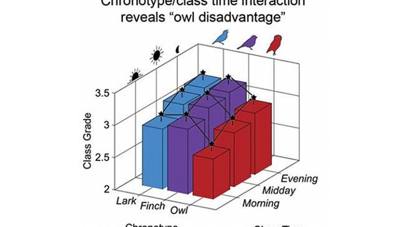 Owls performed worst of all the groups due to chronic social jet lag. Credit Benjamin Smarr