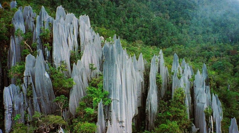 The Pinnacles of Gunung Mulu in Borneo are an example of where limestone rock weathering would be expected to produce significant levels of nitrogen. Credit Paul White on FLICKR