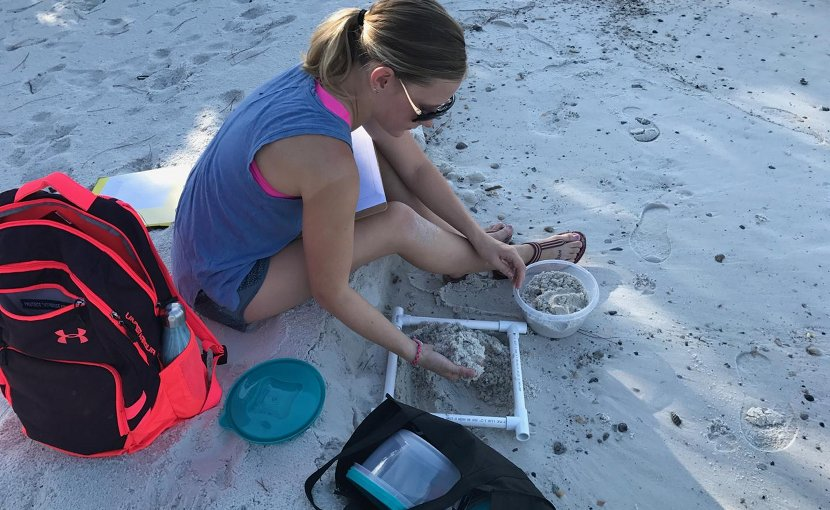 Student researcher Victoria Beckwith surveyed 10 important loggerhead turtle nesting beaches along the Gulf coast. Microplastics were present at each site. Credit Victoria Beckwith