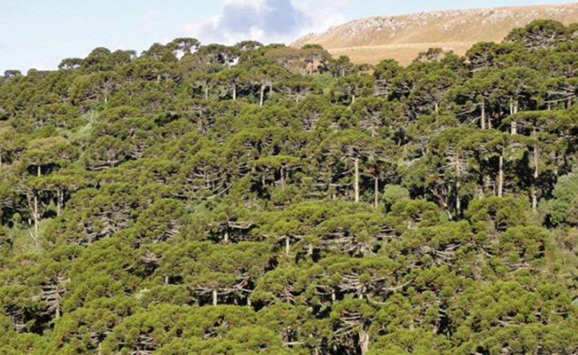 Campos da Serra y Floresta de Araucari. Credit Copyright Jose Iriarte