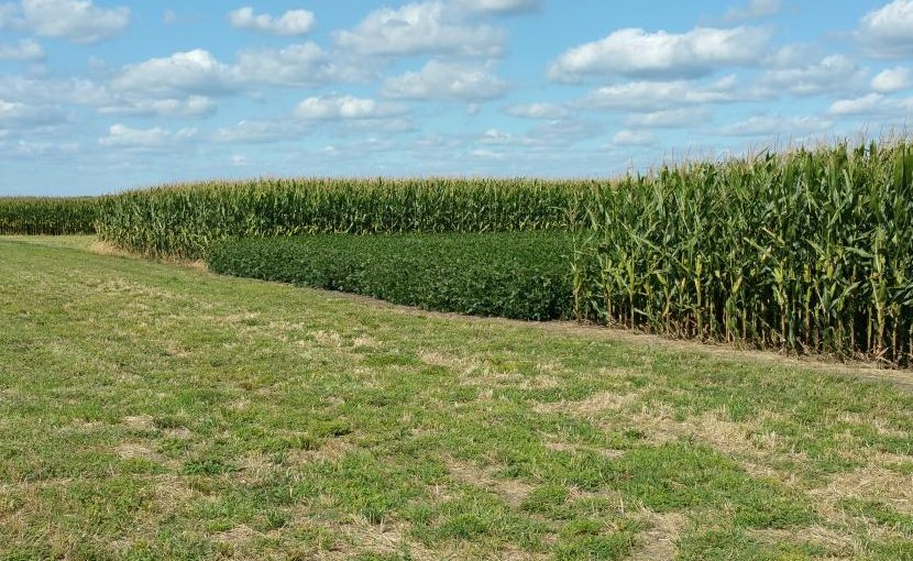 University of Illinois researchers confirmed, through long-term observation, that corn-soy rotation increases yield and decreases greenhouse gas emissions relative to continuous planting of either crop. Credit Gevan Behnke, University of Illinois