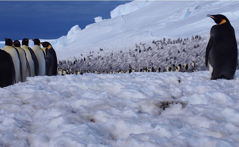 In a new study, scientists say they can monitor the health of penguin colonies -- like this one at Pointe Géologie in Adélie Land in Antarctica -- by setting up long-term observatories that relay data to researchers thousands of miles away. Credit © Céline Le Bohec/IPEV/CNRS/CSM
