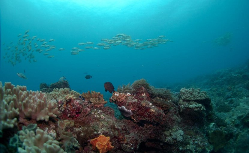 Schooling fish in a coral reef system along the coast of Kenya, where a 20-year study on fisheries has yielded a new model on determining how much fish can be taken from coastal ecosystems without harming reefs. Credit E. Darling/WCS
