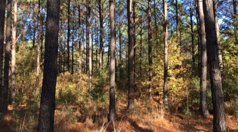 Researchers looked specifically at conditions in the Southeastern United States, often referred to as the 'wood basket of the United States' for its productive forests. Credit Virginia Tech