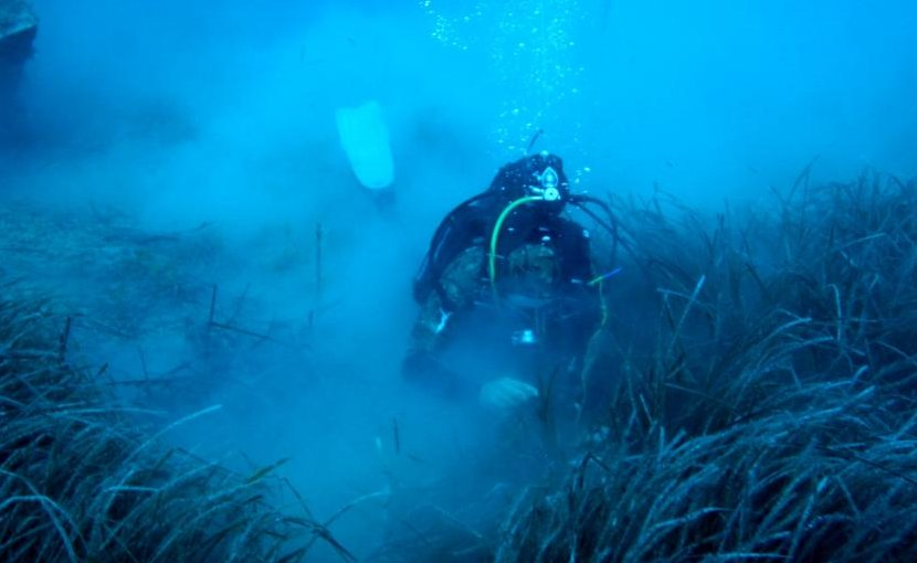 A diver surveys meadows of Posidonia oceanica off the coast of Cyprus. Credit Demetris Kletou/University of Plymouth