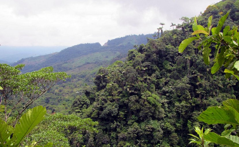This is a forest in the foothills of the Colombian Andes, Putumayo Province. Credit Chris Jiggins