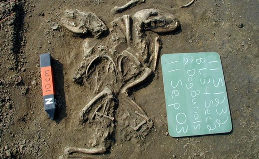 A ritual burial of two dogs at a site in Illinois near St. Louis suggests a special relationship between humans and dogs at this location and time (660 to 1,350 years ago). Credit Photo courtesy Illinois State Archaeological Survey.