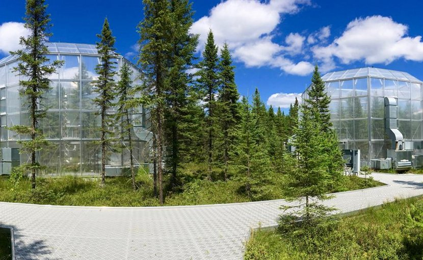 Plants in the warmest of several study areas at the SPRUCE experimental site remained green and functional up to six weeks longer than plants growing at ambient temperatures. Credit Oak Ridge National Laboratory, U.S. Dept. of Energy