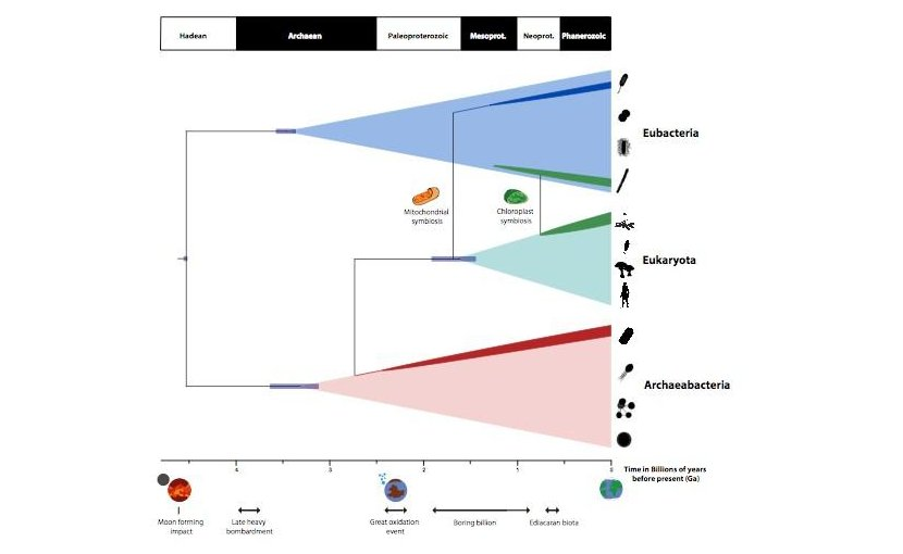 A timescale for the evolution of life on planet Earth summarising the findings of Betts et al. study. Credit University of Bristol
