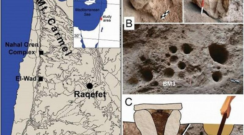 This is the site location and artifacts analyzed. (A) The location of Raqefet Cave and three additional Natufian sites in Mt. Carmel; (B) field photos of the studied boulder mortars (BM1,2) and the location of BM3 on the cave floor (scale bar and arrow: 20 cm); (C) a functional reconstruction of the mortars: a boulder mortar used to store plants in a basket with a stone slab on top, and a bedrock mortar used for pounding and cooking plants and brewing beer. Credit Credits to Elsevier, Journal of Archaeological Science: Reports Credits for photos: Dror Maayan; Graphic design: Anat Regev-Gisis