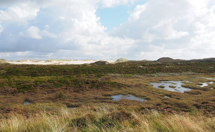 peatland bogs heather