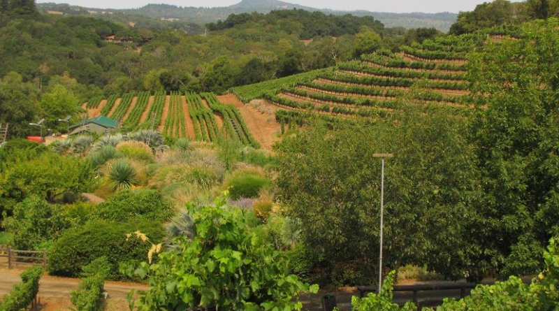 The Benzinger Family Winery is a diversified vineyard in Sonoma County. Credit Corey Luthringer