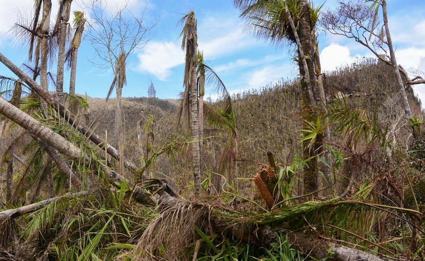 Puerto Rico's forests and streams were dramatically changed by Hurricane Maria's hit on the island. Credit USFS