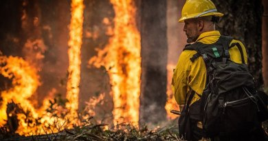 wildfire forest fire firefighter