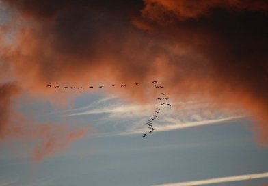 birds migration sunset