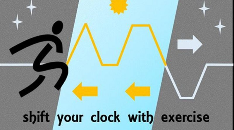 New research in The Journal of Physiology suggests that exercise could counter the effects of jet lag, shift work, and other disruptions to the body's internal clock, helping individuals adjust to shifted schedules. Credit Credit: Kathryn Elliott. This image is in the public domain.