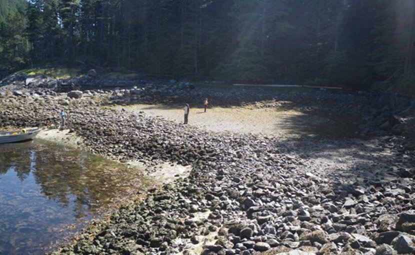 A study led by SFU archaeology professor Dana Lepofsky and Hakai Institute researcher Nicole Smith reveals that clam gardens, ancient Indigenous food security systems located along B.C.'s coast, date back at least 3,500 years--almost 2,000 years older than previously thought. These human-built beach terraces continue to create habitat for clams and other sea creatures to flourish in the area. Credit Nicole Smith