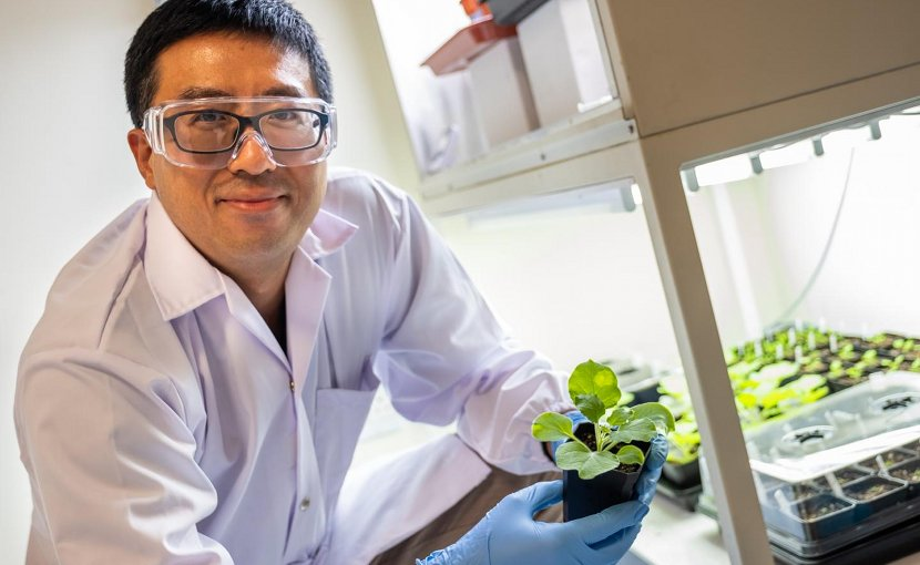Asst Prof Wei Ma from NTU Singapore discovered a sustainable way to demonstrate a new genetic modification that can increase the yield of natural oil in seeds by up to 15 per cent in laboratory conditions. Credit NTU Singapore