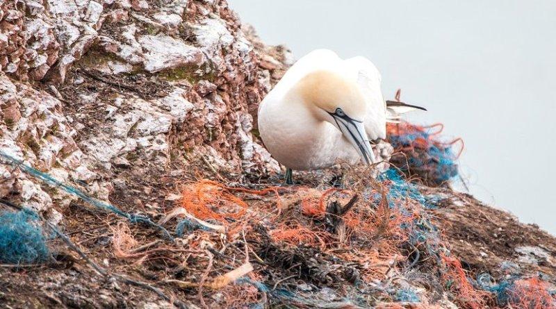 marine plastic bird