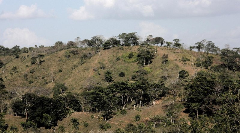 Cattle pastures with isolated trees and living fences in central Panama. Once abandoned, these pastures are where tropical forests begin to regenerate and are initially dominated by fast-growing pioneer species (in the wet tropics). Credit Dylan Craven