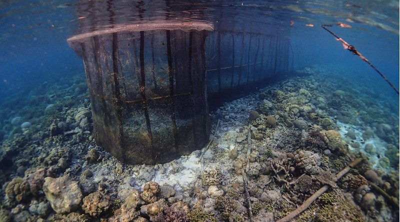 A large fish fence used in Indonesia. Credit Benjamin Jones/ Project Seagrass
