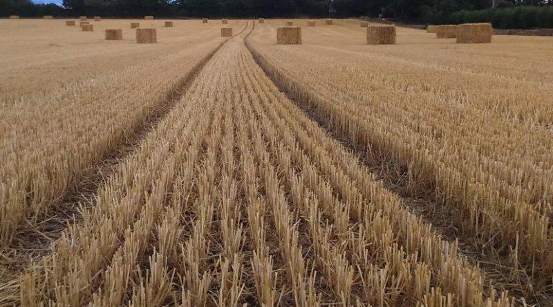 Field. Credit Pic courtesy of Greta Hughson at the Centre for Alternative Technology.
