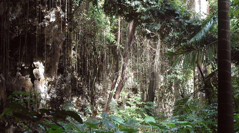 Jungle in Barbados