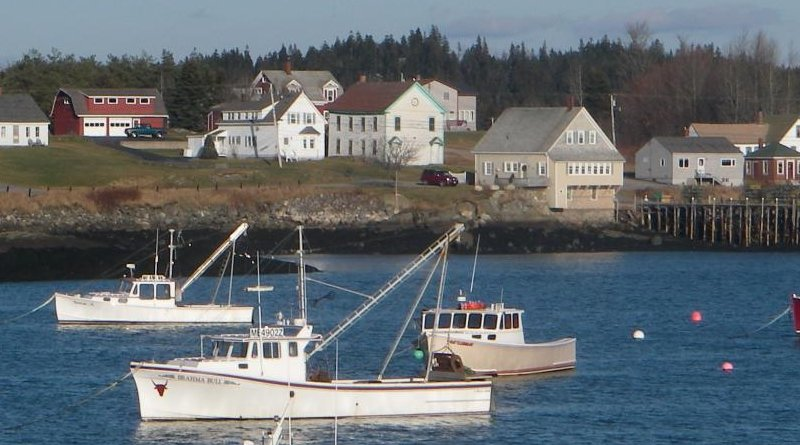 These are lobster boats anchored off Cutler, Maine. Credit Malin Pinsky/Rutgers University-New Brunswick