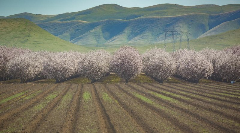 During a prolonged drought, annual crop fields can be left fallow without causing lasting economic damage, but almond groves, such as these in California's Central Valley, require consistent irrigation to stay alive. UCI researchers paid special attention to such flexible and inflexible water uses in a new study published in Nature Sustainability. Credit Steven Davis / UCI