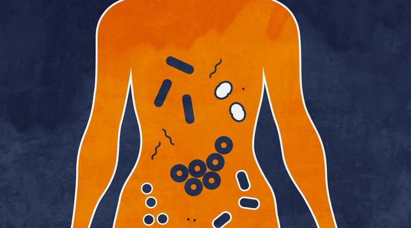 The microbiome is the collection of microorganisms that live in and on us. New research from the University of Virginia School of Medicine suggests an unhealthy microbiome can promote the spread of breast cancer. Credit Alexandra Angelich   UVA