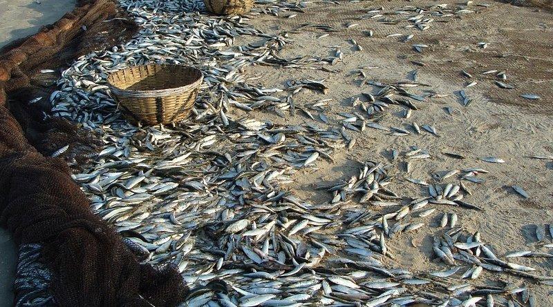 Sardine fishing in India