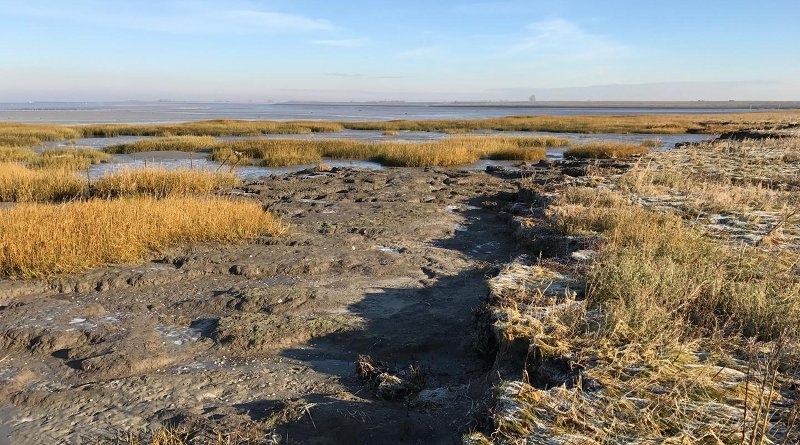 An eroded marsh with vegetation recovery on the neighboring tidal flat. Credit Zhenchang Zhu at NIOZ