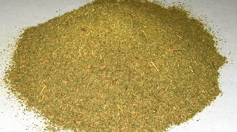Typical powdered commercial Kratom, Mitragyna speciosa. Source: Wikipedia Commons.