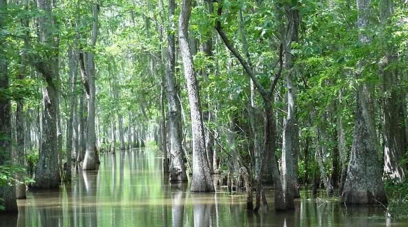 Louisiana swamp houma