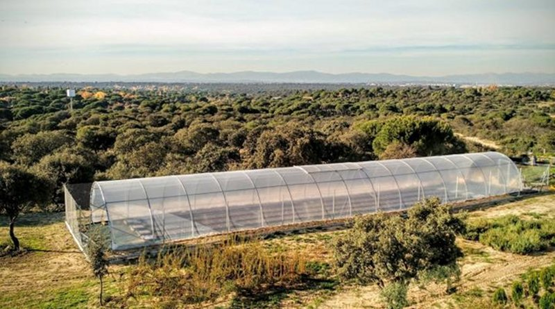 The researchers have investigated the adaptability of Arabidopsis plants to climate change in greenhouses. The species will lose its genetic diversity under the increasingly dry climate around the Mediterranean. Credit MPI f. Developmetnal Biology/ M. Exposito-Alonso
