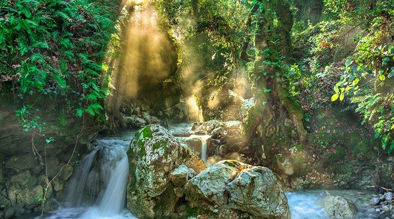 jungle forest river stream