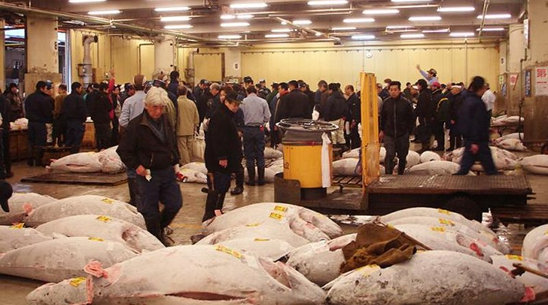 Tuna at the Tsukiji fish market in Japan Credit Photo by Humanoid one, Wikimedia Commons.