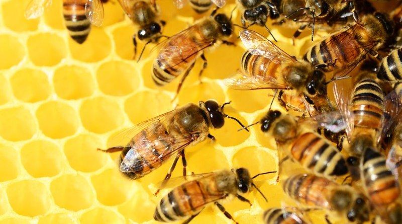 honey bees beehive