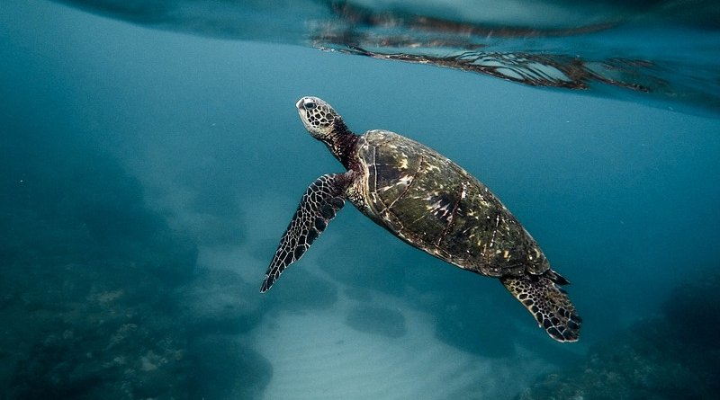 sea turtle ocean