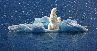 polar bear arctic climate change