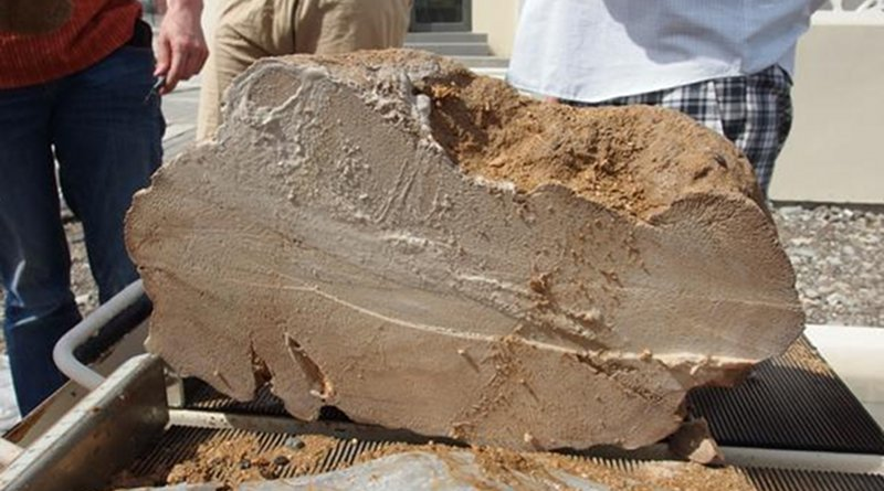 This is a 4,100-year-old Oman coral fossil. CREDIT Hokkaido University