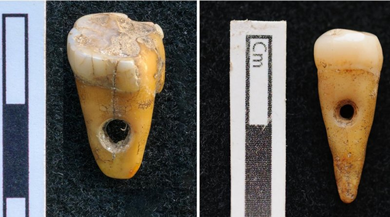 The two drilled 8,500-year-old human teeth found at Çatalhöyük in Turkey. CREDIT University of Copenhagen