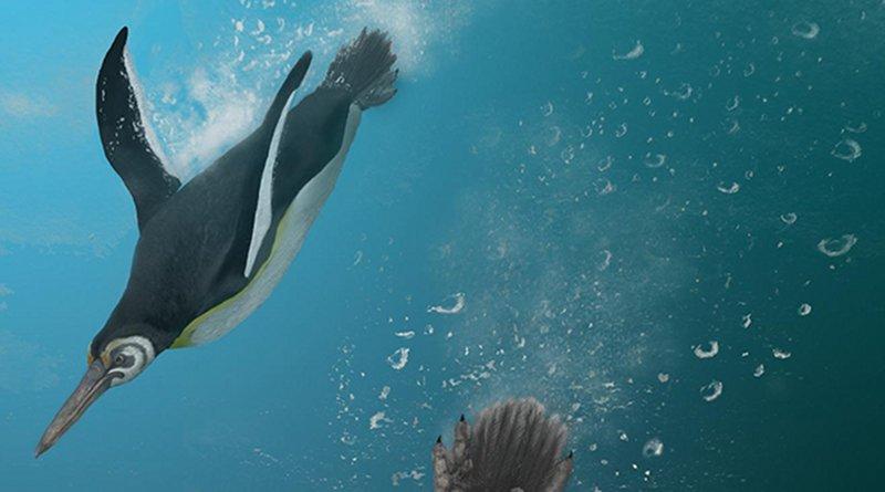 Detail of an illustration of the newly described Kupoupou stilwelli by Jacob Blokland, Flinders University. CREDIT: Jacob Blokland, Flinders University