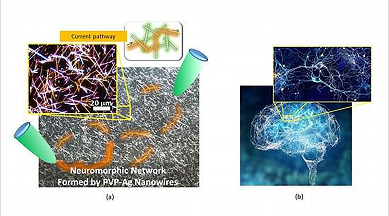 (a) Micrograph of the neuromorphic network fabricated by this research team. The network contains of numerous junctions between nanowires, which operate as synaptic elements. When voltage is applied to the network (between the green probes), current pathways (orange) are formed in the network. (b) A Human brain and one of its neuronal networks. The brain is known to have a complex network structure and to operate by means of electrical signal propagation across the network. CREDIT NIMS