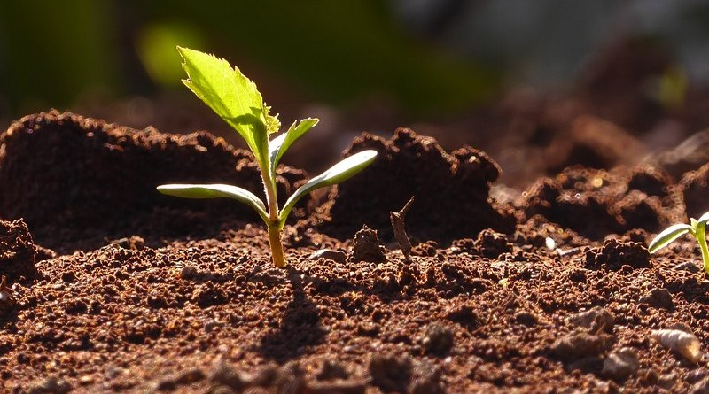 seeds sprouts plants