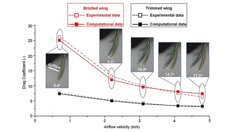 Comparison of the drag coefficient between the experimental measurement and computational analysis. Variation in the deflection angle of the bristled wing with the airflow velocities of 0.7, 2.2, 3.1, 4.1 and 4.8 meters per second. CREDIT: Yonggang Jiang/Beihang University