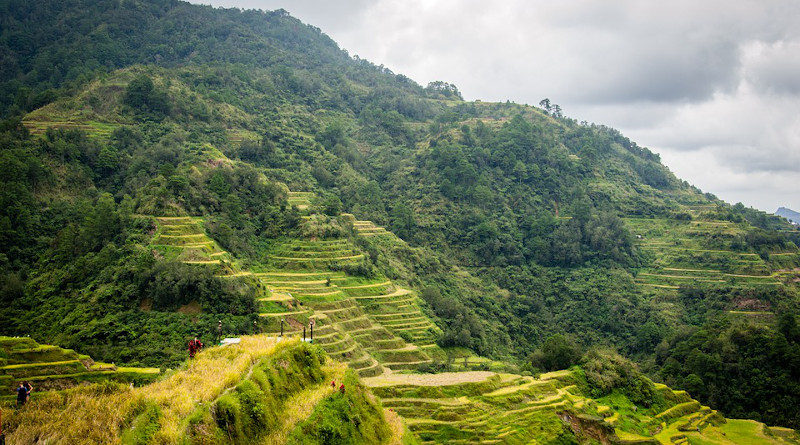 Philippines Rice Terraces