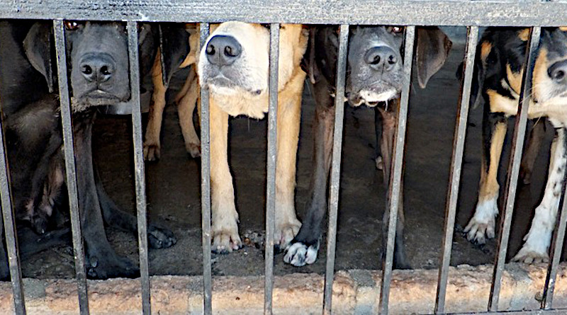 dogs pound cage