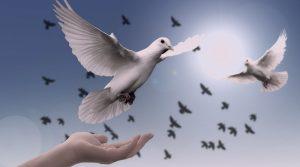 Dove Hand Trust God Pray Prayer Peace Soul
