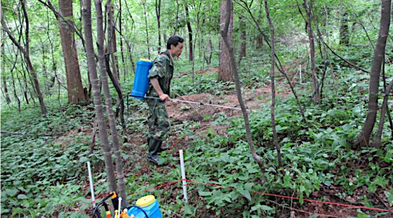 """Spraying nitrogen solution onto a forest floor is a commonly used method, mimicking nitrogen deposition, but scientists are now concerned if they can represent the """"real"""" results CREDIT Dan Xi"""